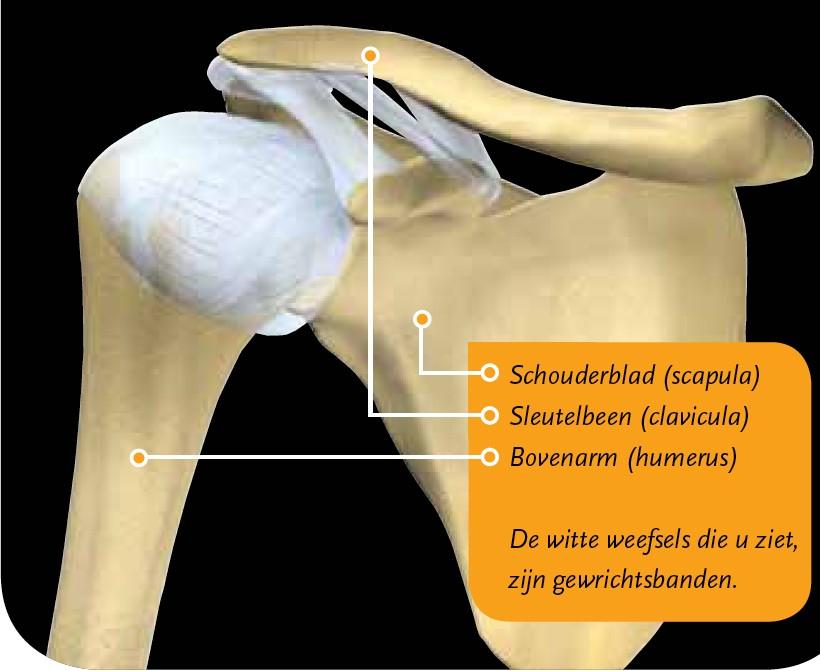 Arm uit de kom (schouderluxatie)